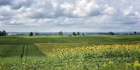 clarendon-field
